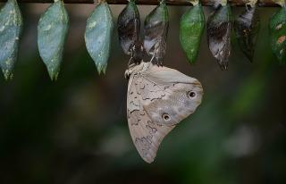 butterfly-329543_1920